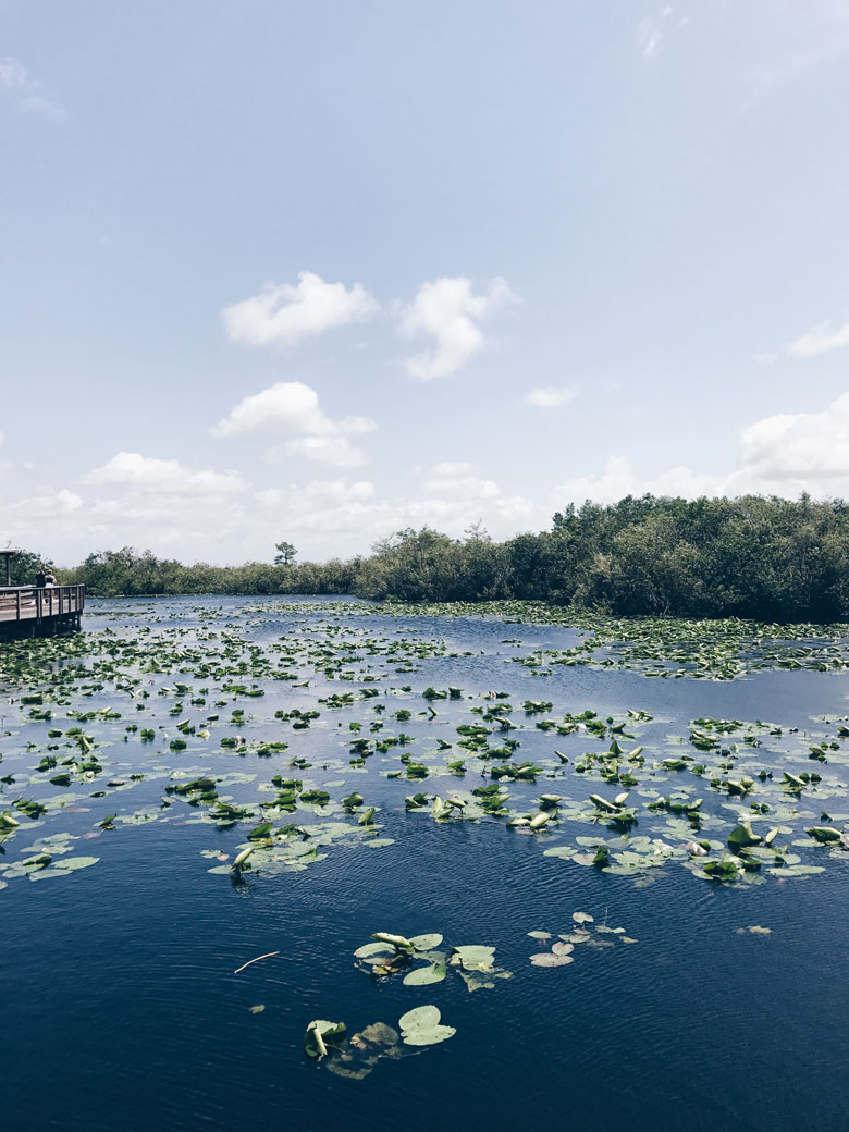 The Everglades- A taste of my week in Miami