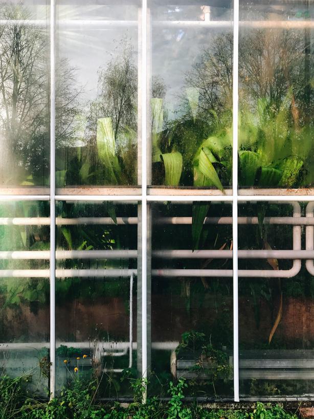 a weekend in Amsterdam botanical garden